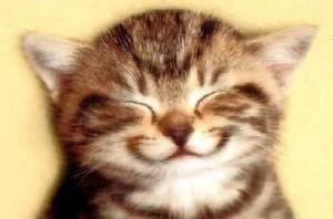 smiling_cat